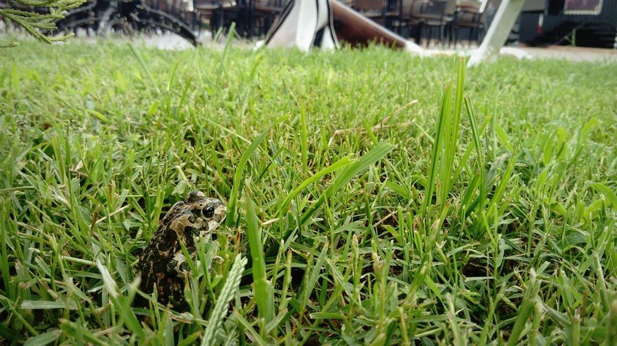 Grass Green Color Nature Frog