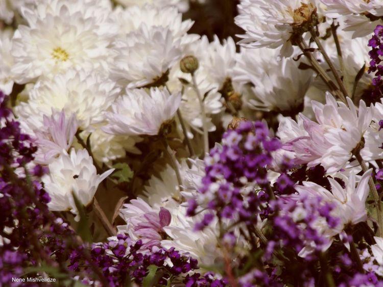 Flowers Botanical Gardens Tbilisi
