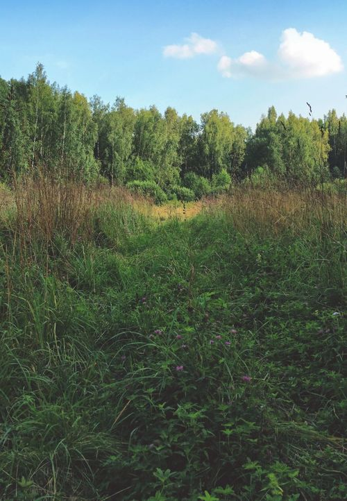 ..Edge of the Woods ... Russia Field Nature Natur Naturaleza Inviting Road поляна полянка Лес подмосковье