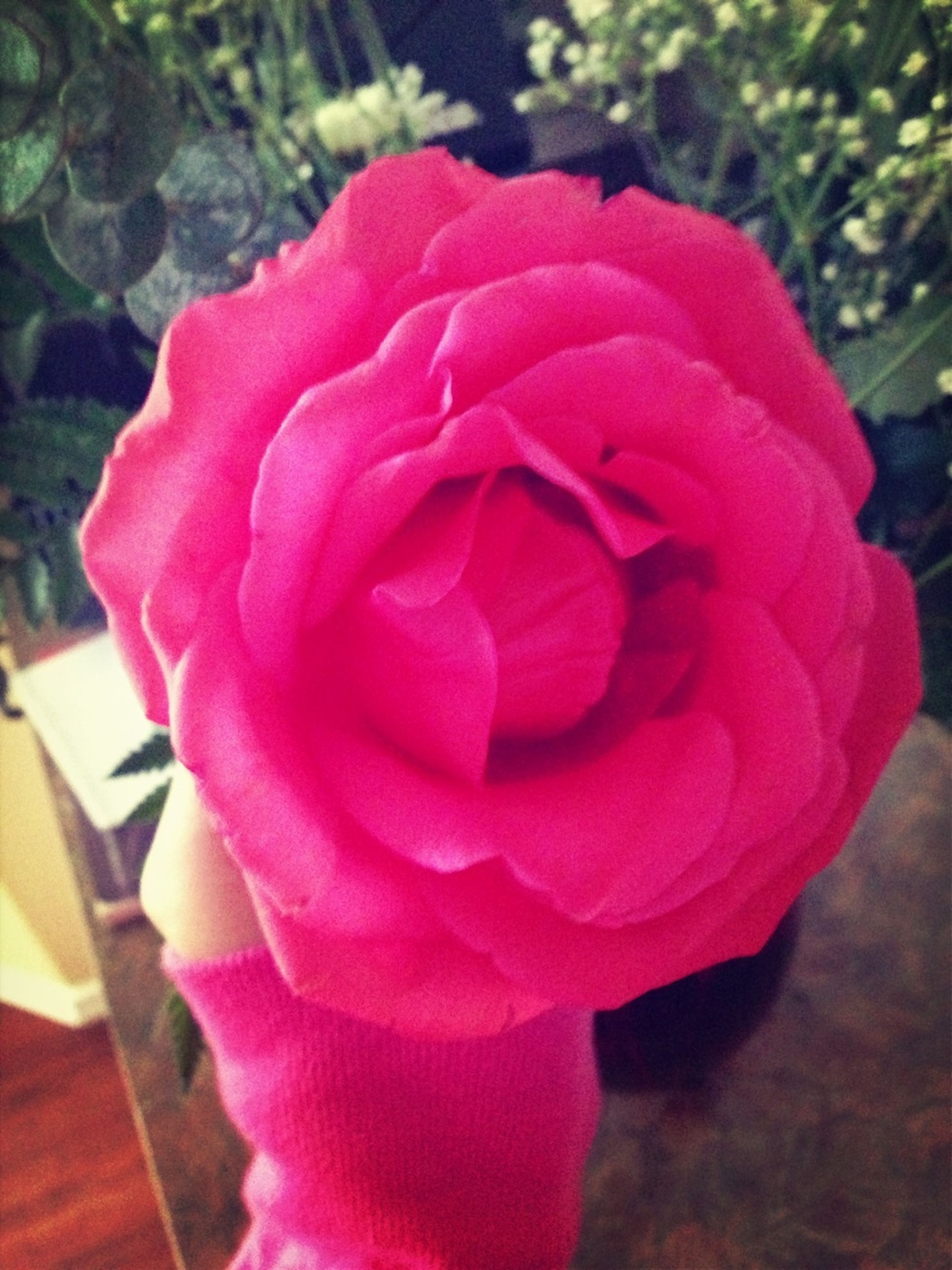 flower, petal, flower head, rose - flower, freshness, fragility, close-up, beauty in nature, pink color, single flower, growth, rose, focus on foreground, nature, blooming, red, pink, plant, in bloom, indoors