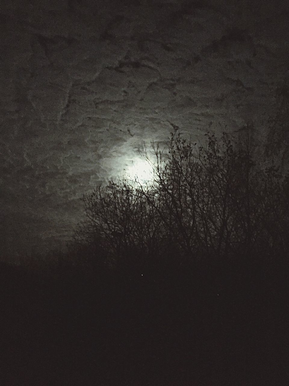 night, moon, dark, nature, no people, bare tree, low angle view, outdoors, tree, scenics, beauty in nature, sky, astronomy