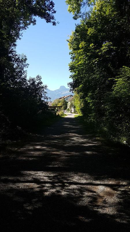 Lichtblick Berge Mountains Waldspaziergang Forestwalk Forest Wald Ray Of Hope Lichtblick Weg Way