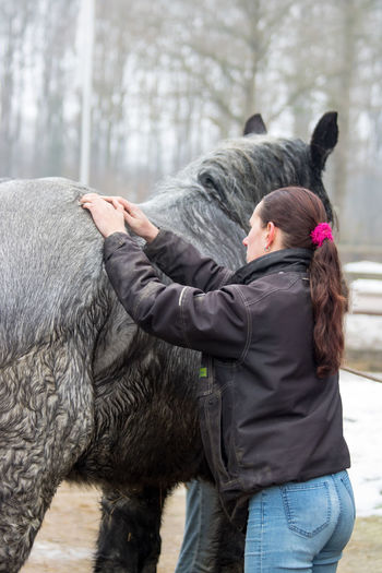 Examination Gray Horses Back Pain Backache Equine Horse Osteopathy Therapy Physical Sick Horse