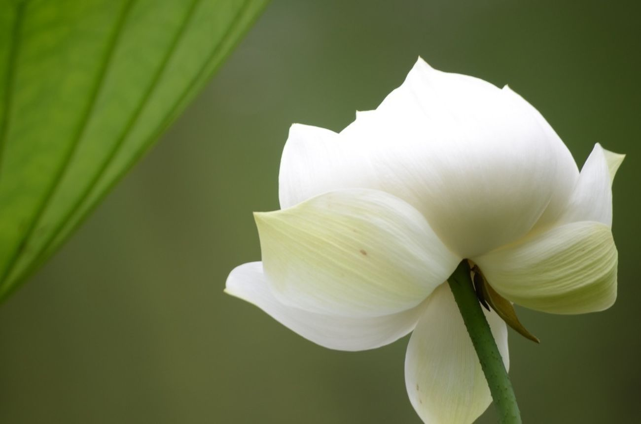 Flowers 水辺 EyeEm Nature Lover