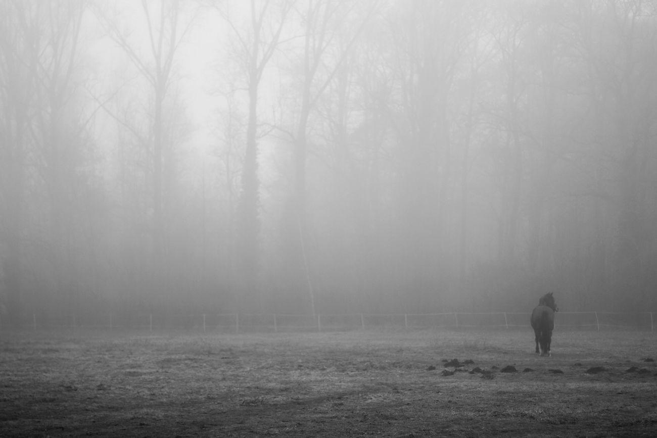 Foggy Morning Melancholic LandscapesMinimalism Deceptively Simple Monochrome Grey Spirit Bonnejournee!!!