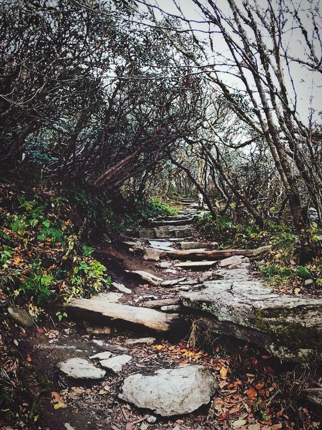 Take a walk on the Wild side 😉 Hiking North Carolina Nature Tree Beauty In Nature Path Love Beautiful