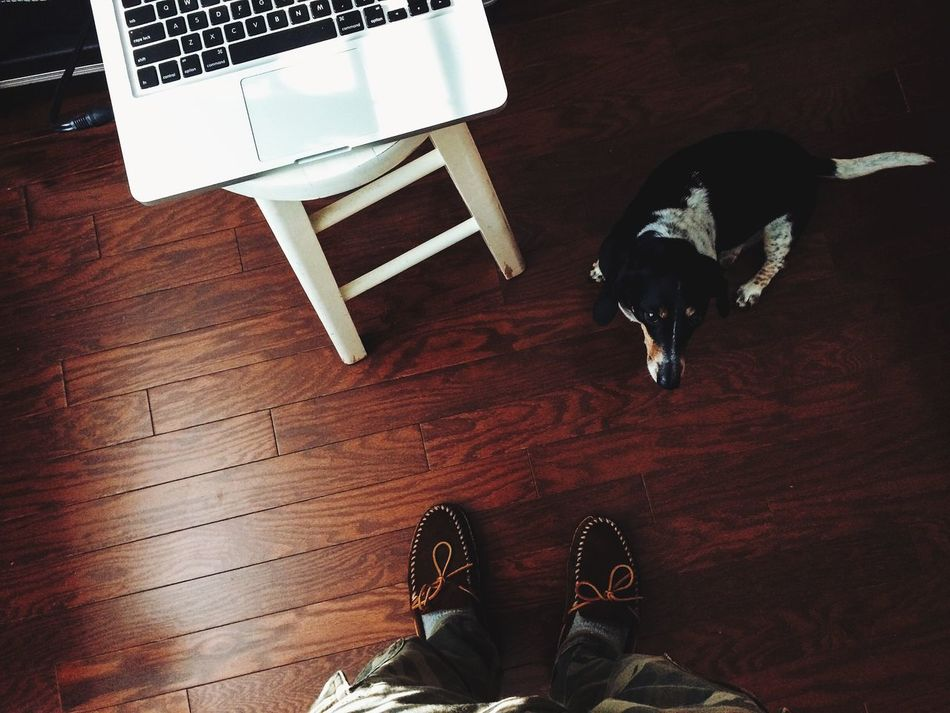 Beautiful stock photos of floor, , Day, Directly Above View, Dog