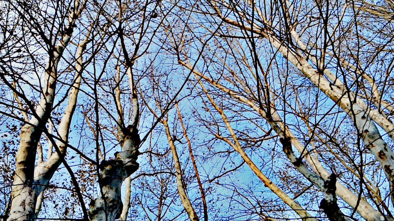Arboles Ramas Taking Photos Relaxing Enjoying Life Hello World Hi! Check This Out Argentina Tree 🍂🍁🍃🌴