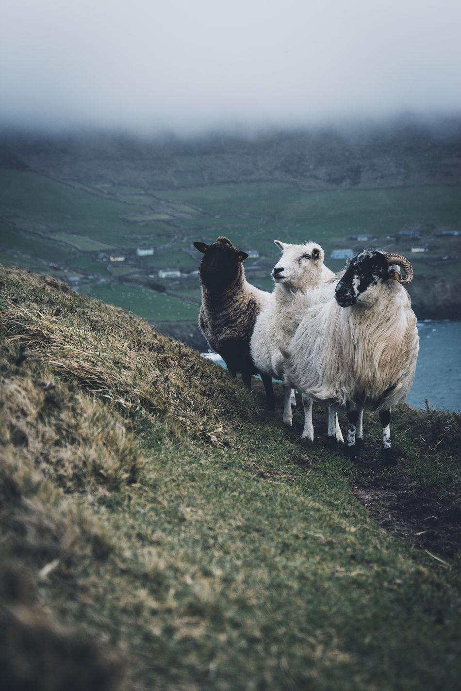 Irish squad. Animal Themes Livestock Mammal Domestic Animals Nature Water Beauty In Nature Field Sky No People Day Outdoors Landscape Grass Bird Sheep Mountain