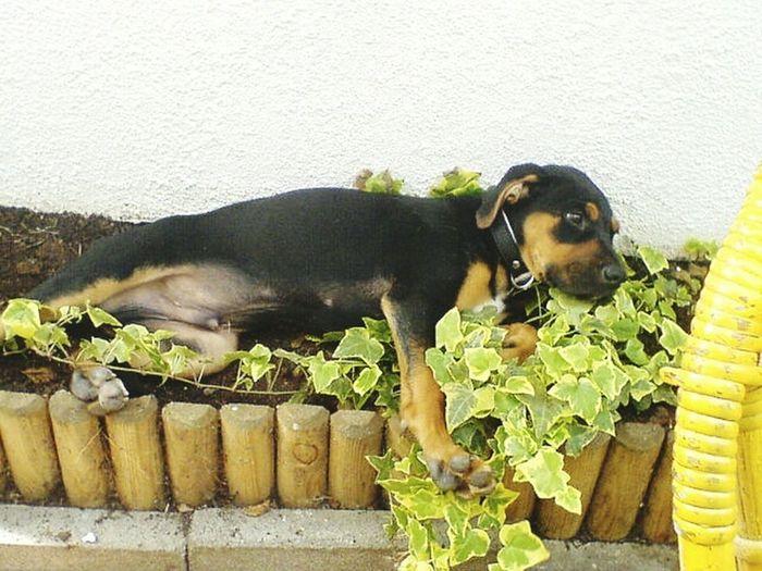 My Love ❤ Babydog