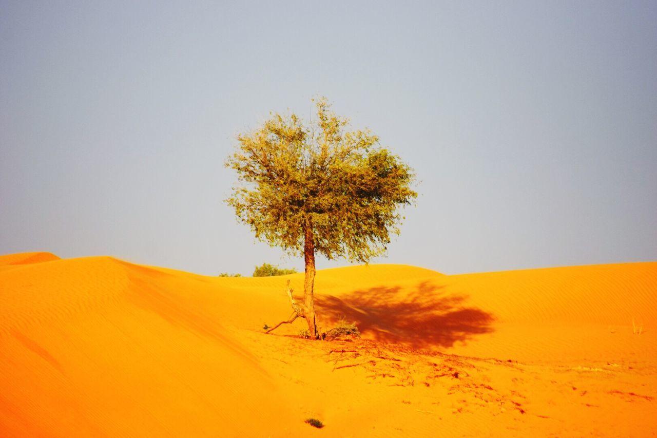 Sand Dune Desert Nature Tree Landscape Beauty In Nature Day Outdoors Sky Burj Khalifa Fujairah Dubai Beauty In Nature Mountain Water Sand & Sea Derser WOW Picutre World Photography Photos