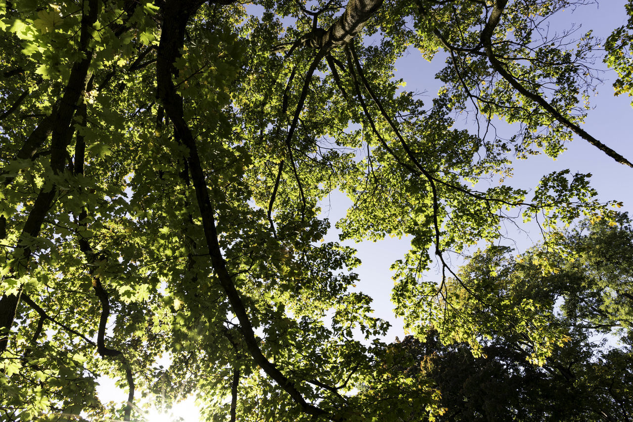 tree, nature, forest, low angle view, day, branch, adventure, beauty in nature, outdoors, no people, blue sky