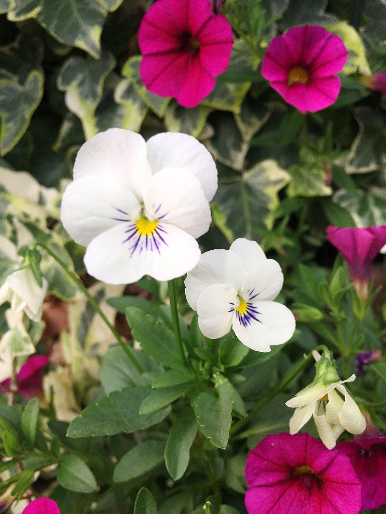 PhotobyTaka ✨☺️✨ 写真が好き Love Japan 咲いている Flower