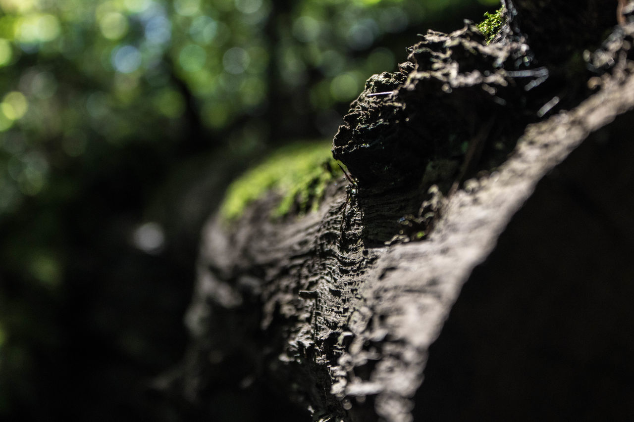 It's all about details. Bark Beauty In Nature Botany Close-up Detail Extreme Close Up Focus On Foreground Green Color Moss Nature No People Outdoors Plant Bark Rough Selective Focus Textured  Tree Tree Trunk Weathered Wood - Material