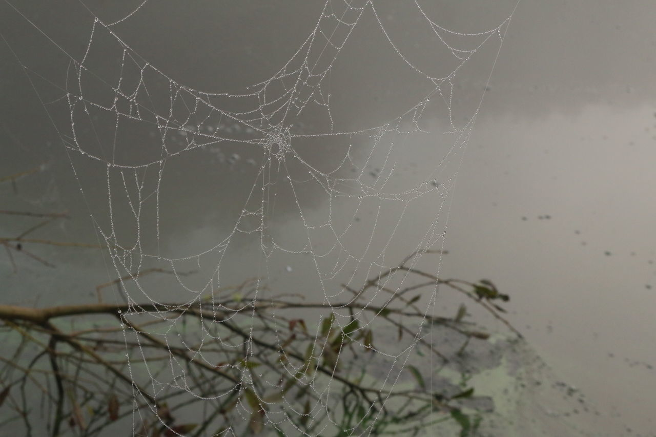 Beauty In Nature Branch Complexity Focus On Foreground Fog Fragility Nature No People Outdoors Spider Spider Web Water Web