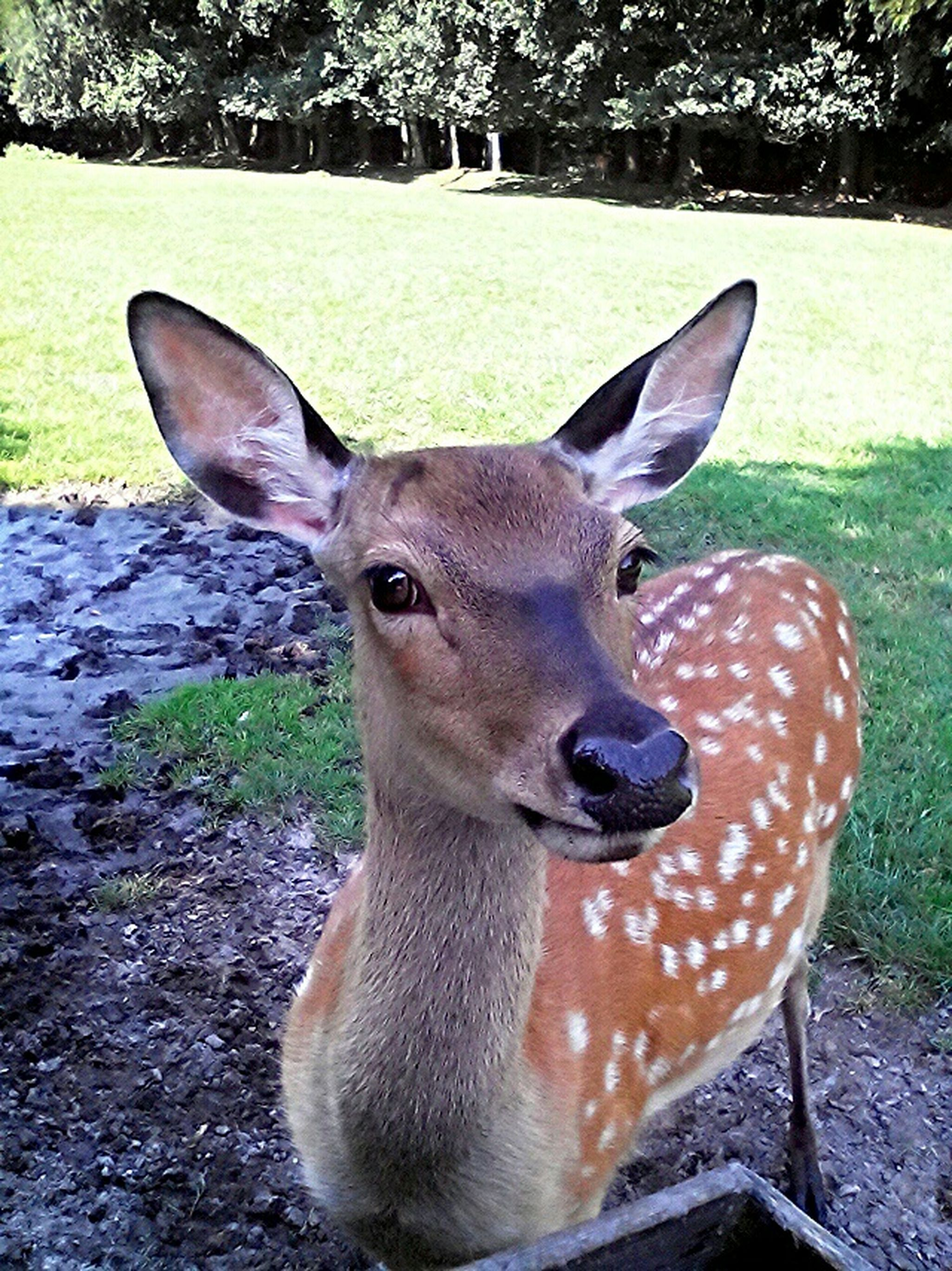 Rehe Reh Deer Deers Nature Wildpark Germany