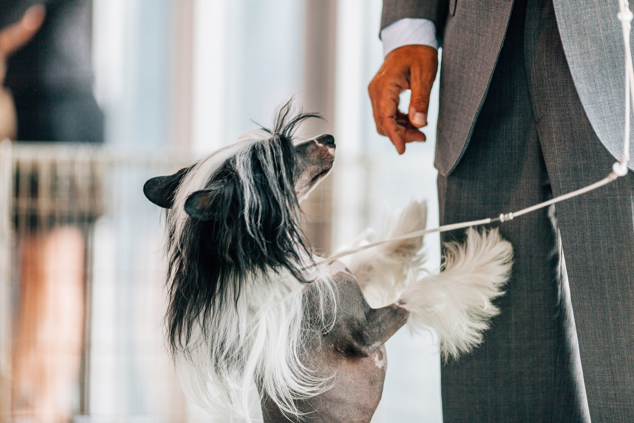Beautiful stock photos of hunde, human hand, real people, lifestyles, midsection