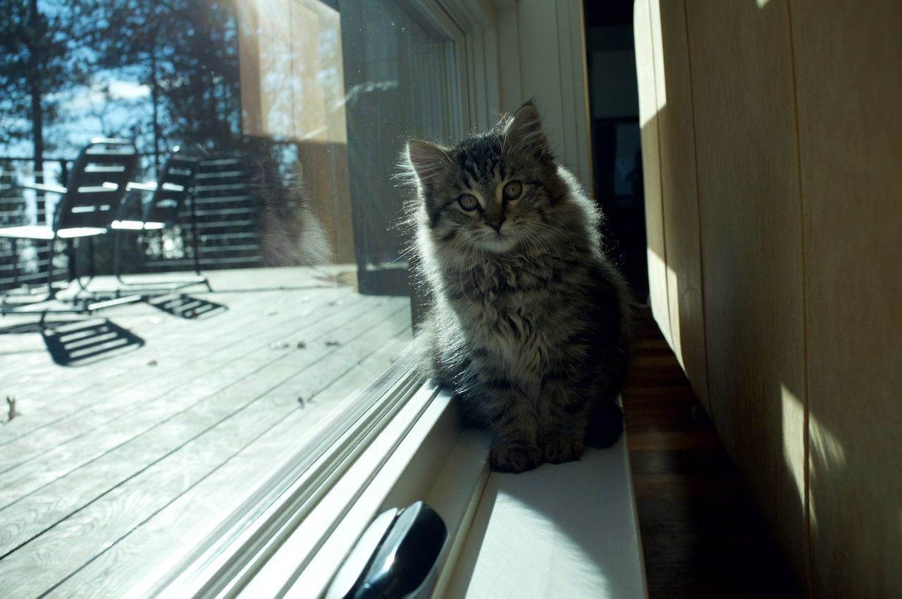 Animal Themes Cat Day Domestic Animals Domestic Cat Duluth Feline Indoors  Mammal Minnesota No People One Animal Pets Whisker Window Sill