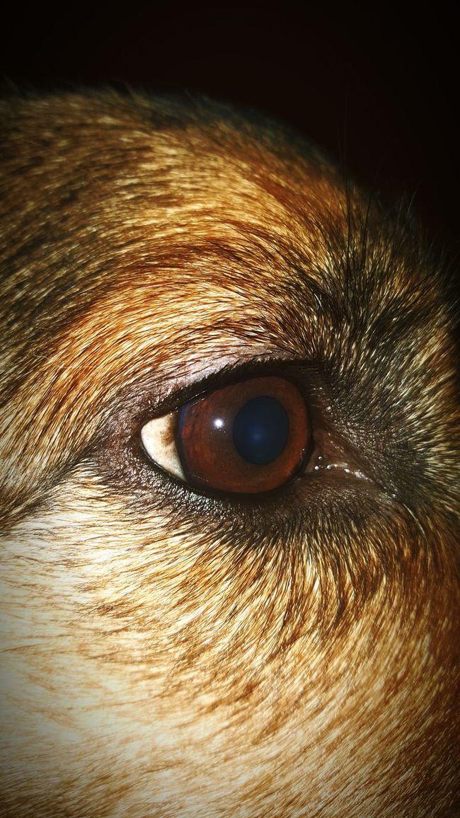 Hello World Taking Photos My Dog My Loyal Companion <3 Mans Best Friend EyeEm Animal Lover Dogs Of EyeEm Pet Portrait Animal Eye Showcase: January Macro Beauty Life4