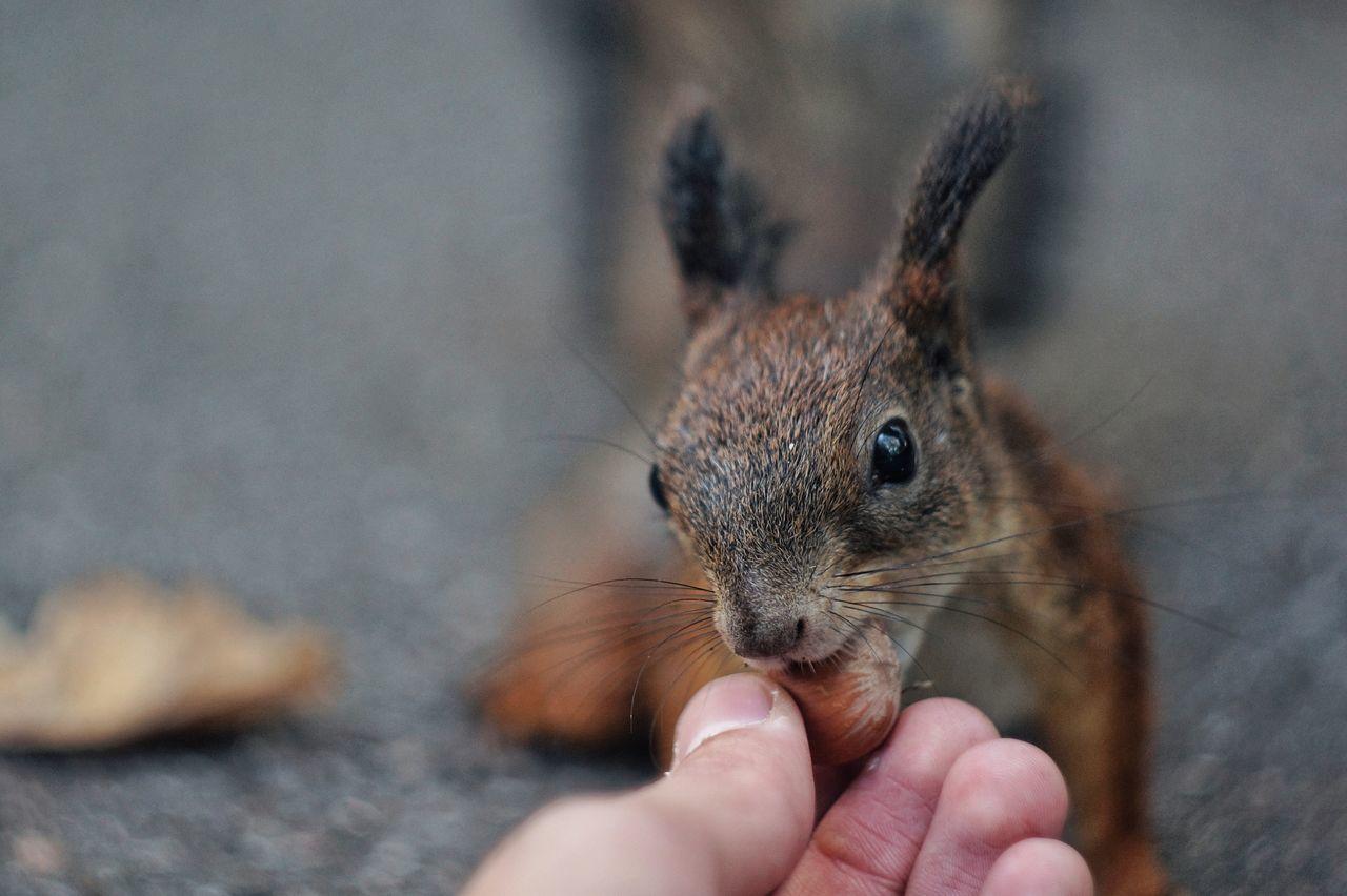 Beautiful stock photos of eichhörnchen,  Animal Eye,  Animals In The Wild,  Cute,  Feeding