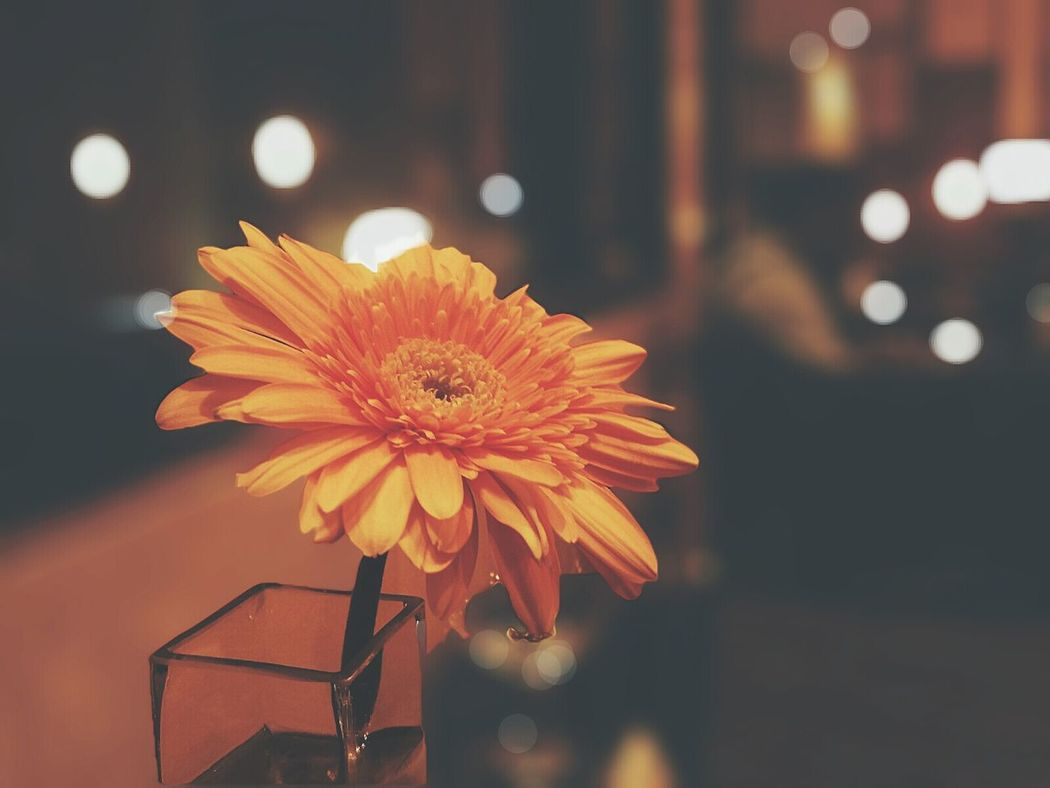 The Moment - 2015 EyeEm Awards Flowerporn Bokeh Photography After Focus Pro Vscocam Adapted To The City