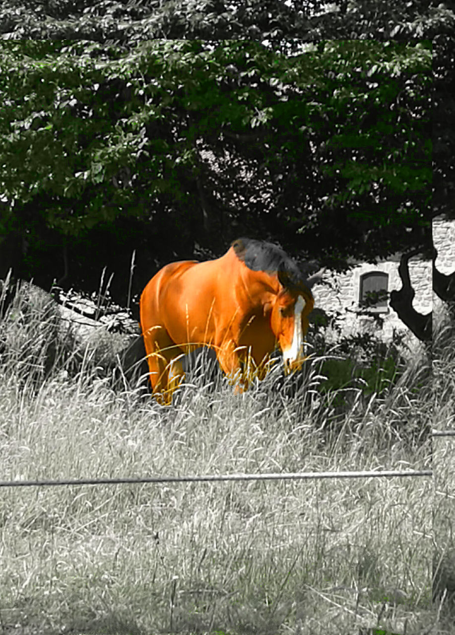 orange color, no people, field, outdoors, day, one animal, animal themes, nature, mammal, grass, tree