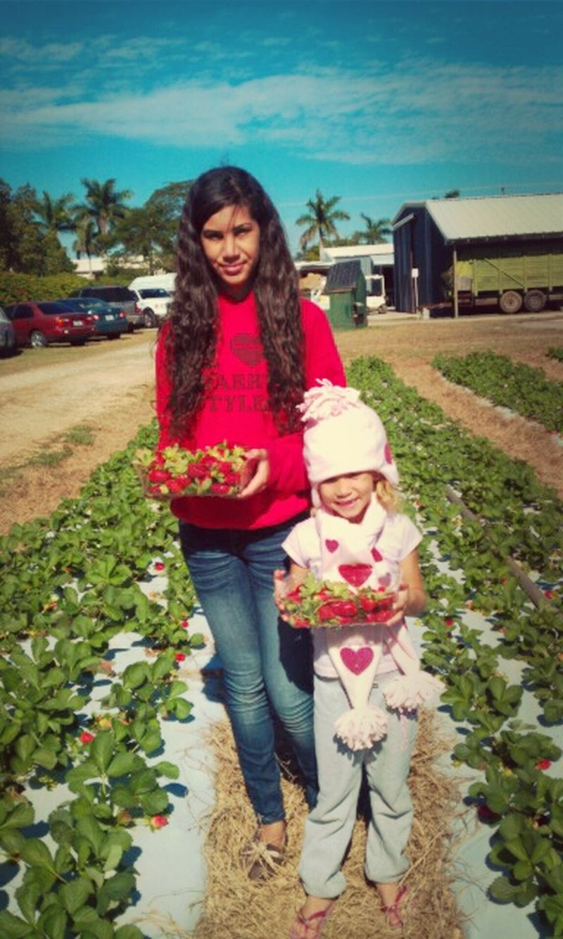 Picking Strawberies