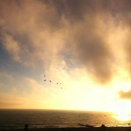 Life Is A Beach So-Cal Is a lifestyle Cityofangels will always be my one&only City Of Lost Angels will never be found Sun_collection, Sky_collection, Cloudporn, Skyporn Enjoying The View Landscape_Collection Landscape_photography Peace And Tranquility Birds_collection