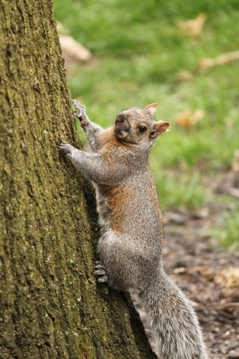 Squirrel Tree Nature EyeEm Selects One Animal Animal Wildlife Animal Animals In The Wild Nature Mammal Outdoors