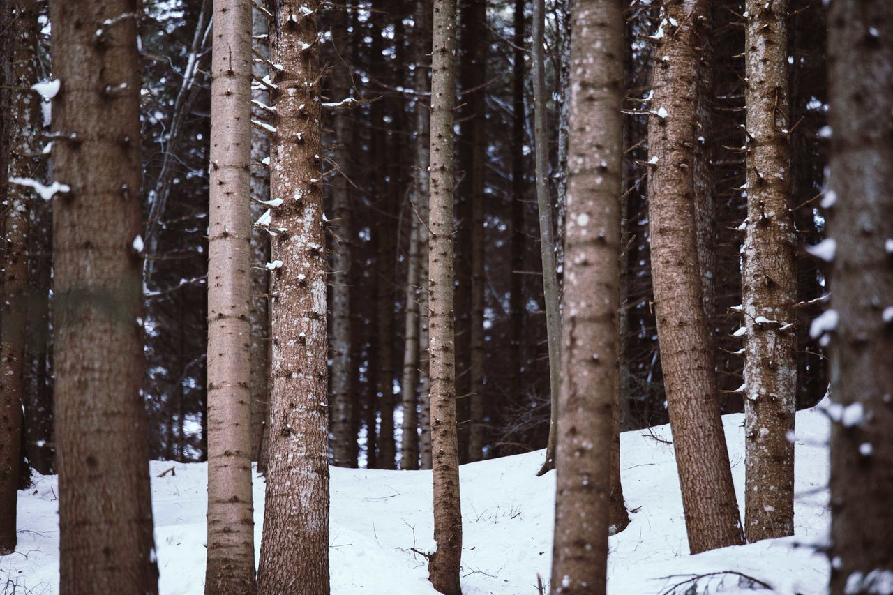 tree, tree trunk, winter, forest, nature, tranquility, full frame, snow, day, cold temperature, outdoors, no people, scenics, birch tree, backgrounds, beauty in nature