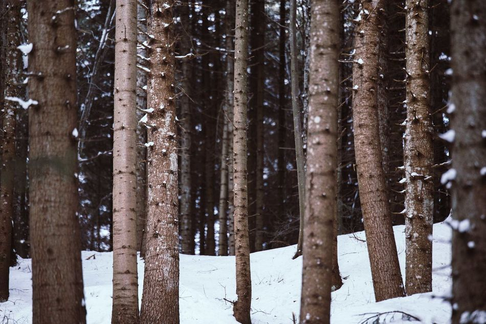Beautiful stock photos of winter,  Backgrounds,  Beauty In Nature,  Birch Tree,  Cold Temperature