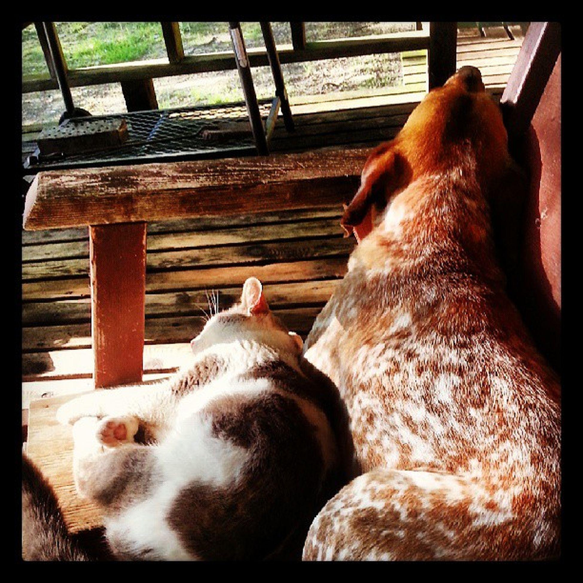The Spotteddog and his Gato