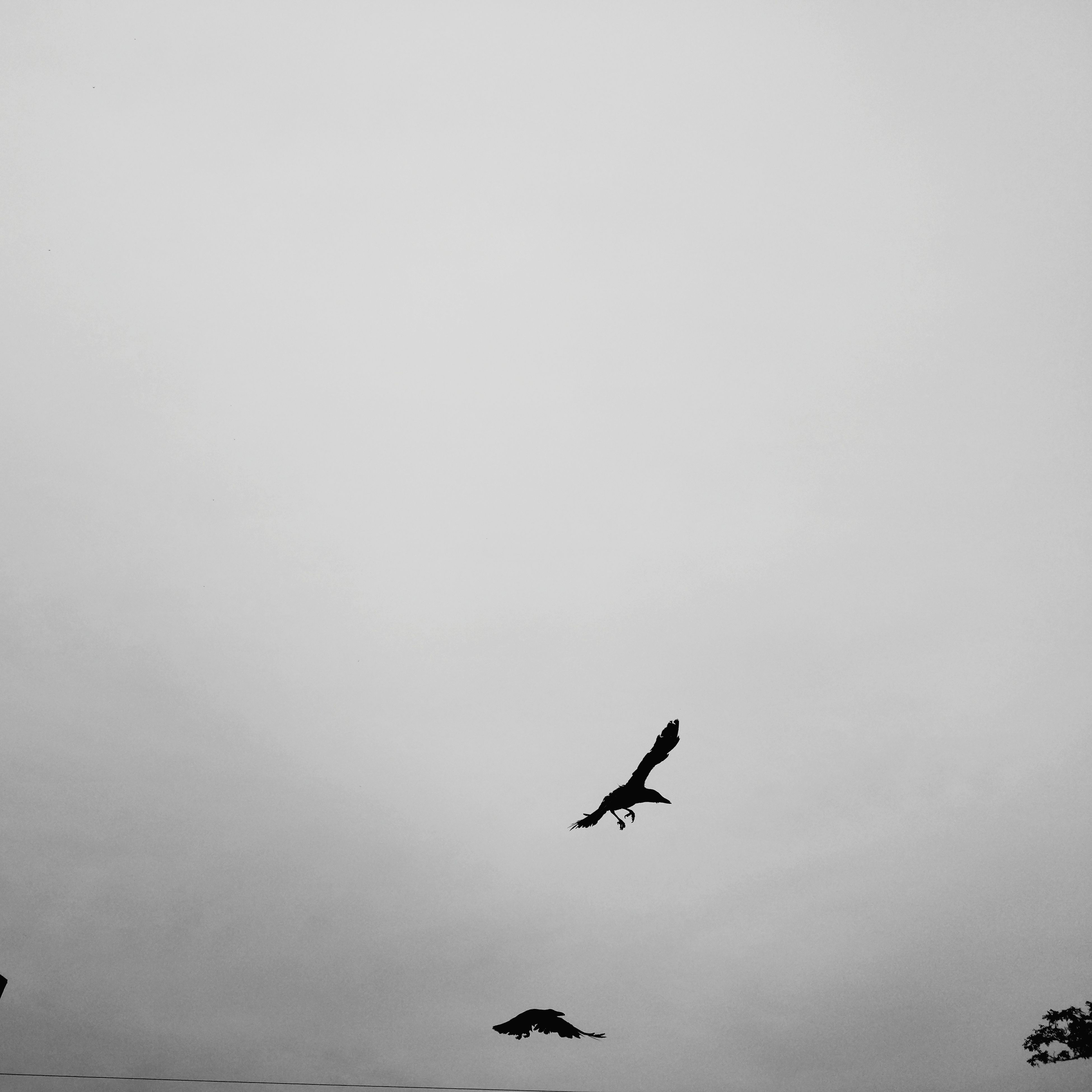 flying, bird, animals in the wild, animal themes, mid-air, one animal, spread wings, animal wildlife, copy space, low angle view, day, nature, no people, outdoors, clear sky, beauty in nature, sky, bird of prey