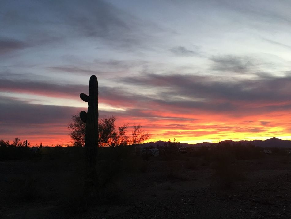 Saguaro cactus at sunset in the Arizona desert. Sunset Beauty In Nature Cloud - Sky Sky Nature Silhouette No People Tranquility Tranquil Scene Scenics Outdoors Arizona Sky Arizona Desert Arizona Sunsets Dramatic Sky Desert Life Saguaro Cactus