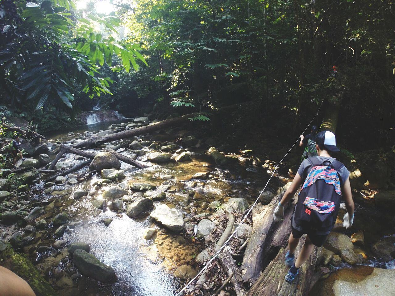 Rear View Of Man On Fallen Tree Crossing River In Forest