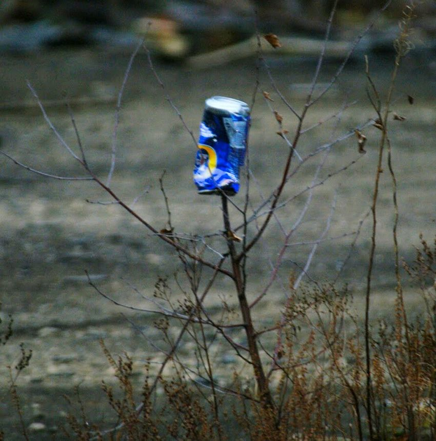 No People Bare Tree Branch Rubbish Refuse Outdoors Discarded Beer Can Winter Day Nature Plant