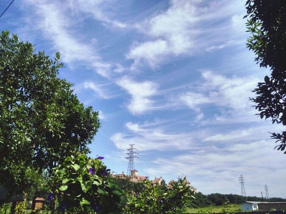 Cloud - Sky Beauty In Nature Palm Tree Sky Outdoors Tree 。。