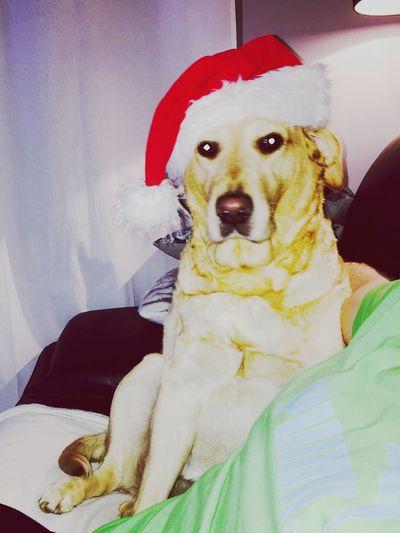Même ma chienne se met à croire au Père Noël