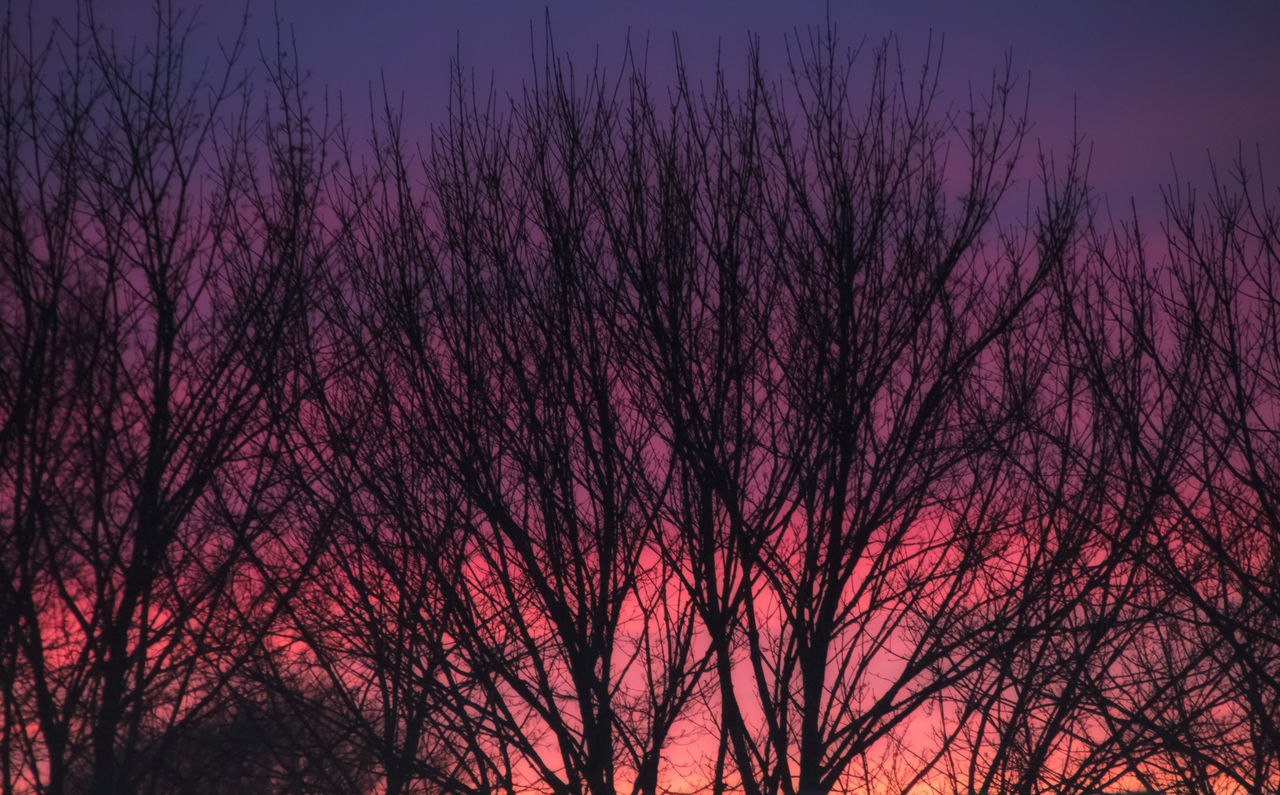 Bare Tree Beauty In Nature Blue Branch Dusk Growth Idyllic Low Angle View Nature Neon Color Neon Sky Neon Sunset Night No People Orange Color Outdoors Scenics Shadows & Lights Silhouette Sky Sunset Tranquil Scene Tranquility Tree Colour Of Life