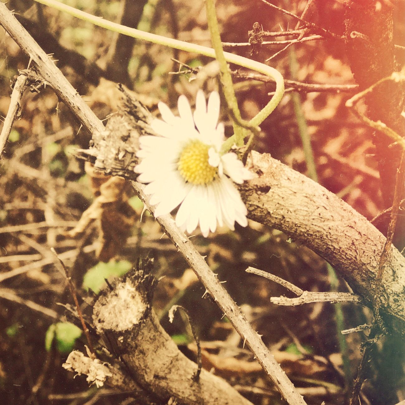 Mobilephotography Nature Flower Vintage Check This Out Forest Nature Photography EyeEm EyeEm Gallery