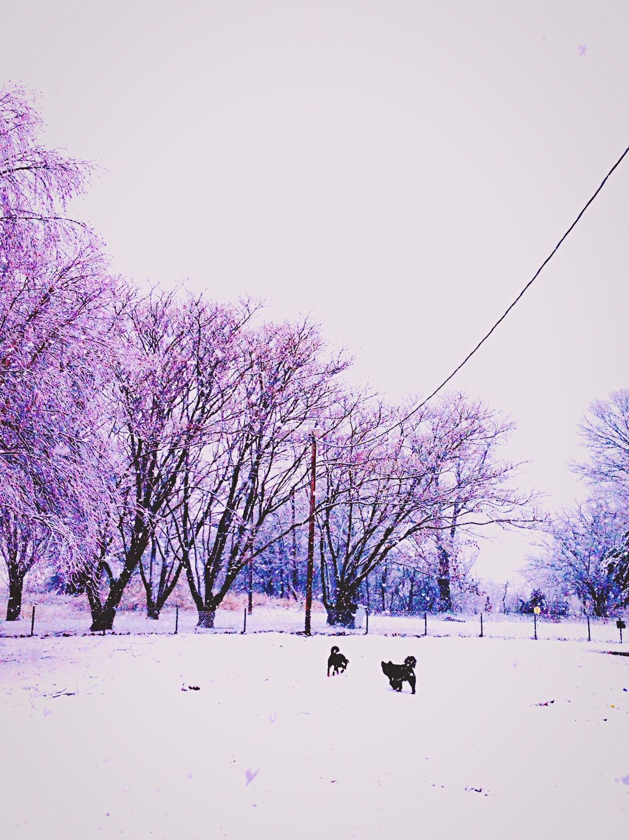 2013 Oklahoma winter storm😍 Snow Covered Dogslife Oklahoma Weather Doggy Love Doggysnowday Snowstorm Purple And White Snowday Snow ❄ Mother Natures Beauty... Mother Nature Nature's Diversities
