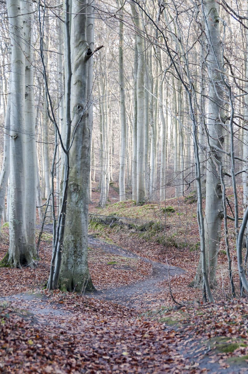 Autumn Beauty In Nature Beech Forest Bosque Buchen Buchenwald Footpath Forest Hayas Hayedo Nature Otoño Outdoors Rügen Sendero Track Trail Wald Wanderweg