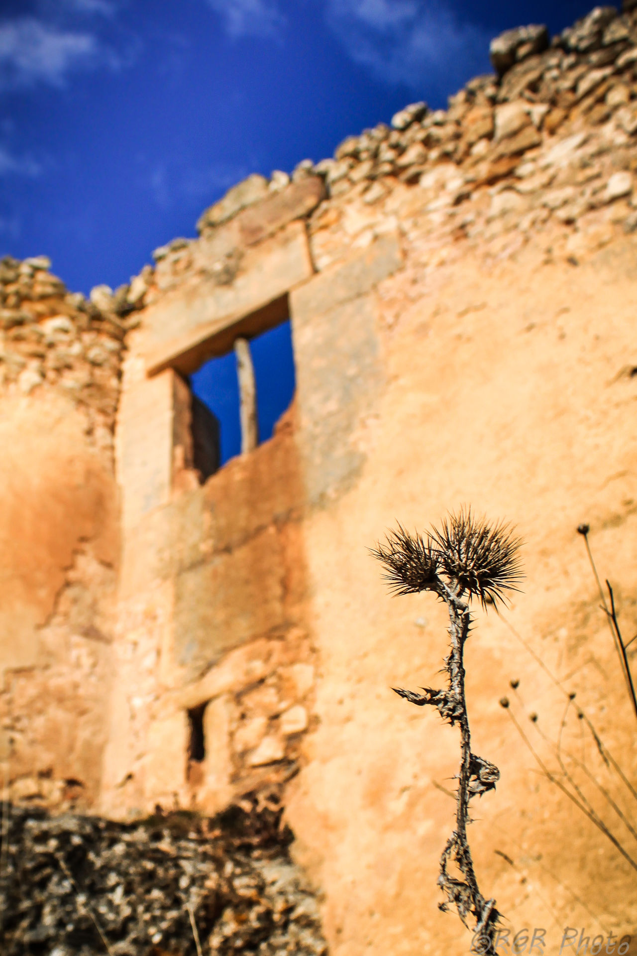 Ancient Architecture Building Exterior Built Structure Cardo Castle Check This Out Cloud - Sky Day Dry EyeEm Gallery History Learn & Shoot: Balancing Elements Low Angle View Nature No People Old Ruin Outdoors Sky Thistle