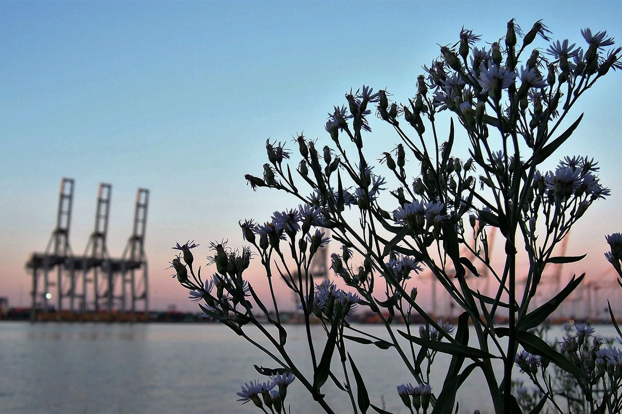 Beauty In Nature Blue Calm Clear Sky Close-up Day Focus On Foreground Growth In Front Of Majestic Nature No People Outdoors Plant Scenics Sea Seascape Southampton Docks Tranquil Scene Tranquility Water Waterfront