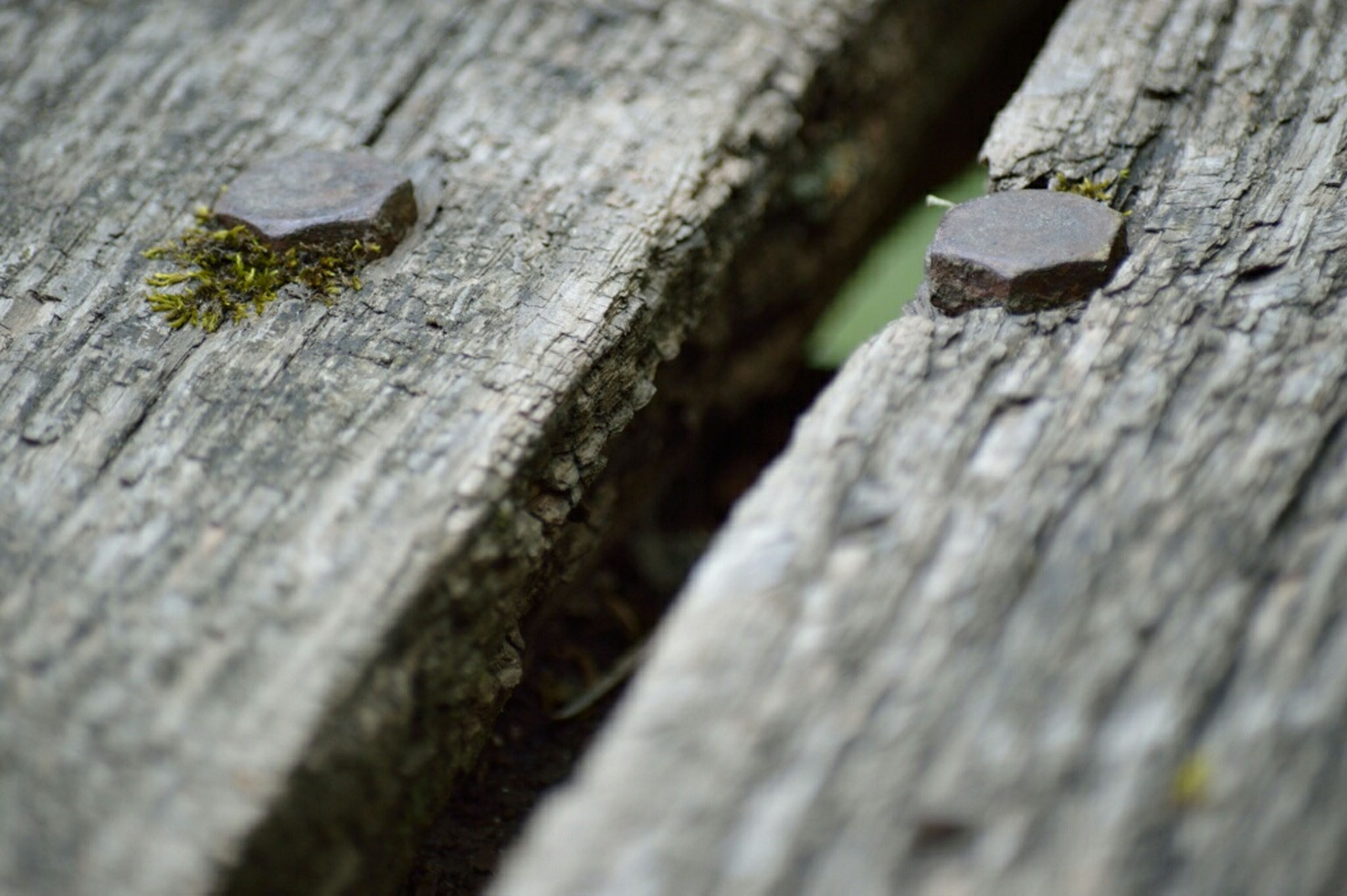 wood - material, wooden, plank, wood, close-up, textured, selective focus, weathered, rough, animal themes, wildlife, day, outdoors, focus on foreground, old, nature, insect, tree trunk, one animal, no people