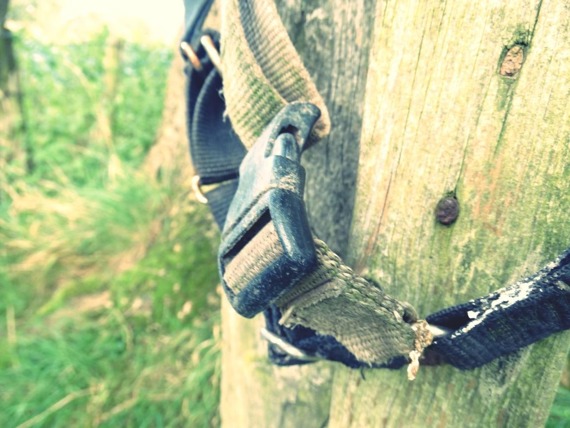 Old strap on wooden post. Close-up Selective Focus Focus On Foreground Tranquility Surface Level Remote Tranquil Scene Non-urban Scene No People WoodLand Buckle Wooden Hiking Strap Equipment Outdoors Woods Wood WoodLand Plastic Nature