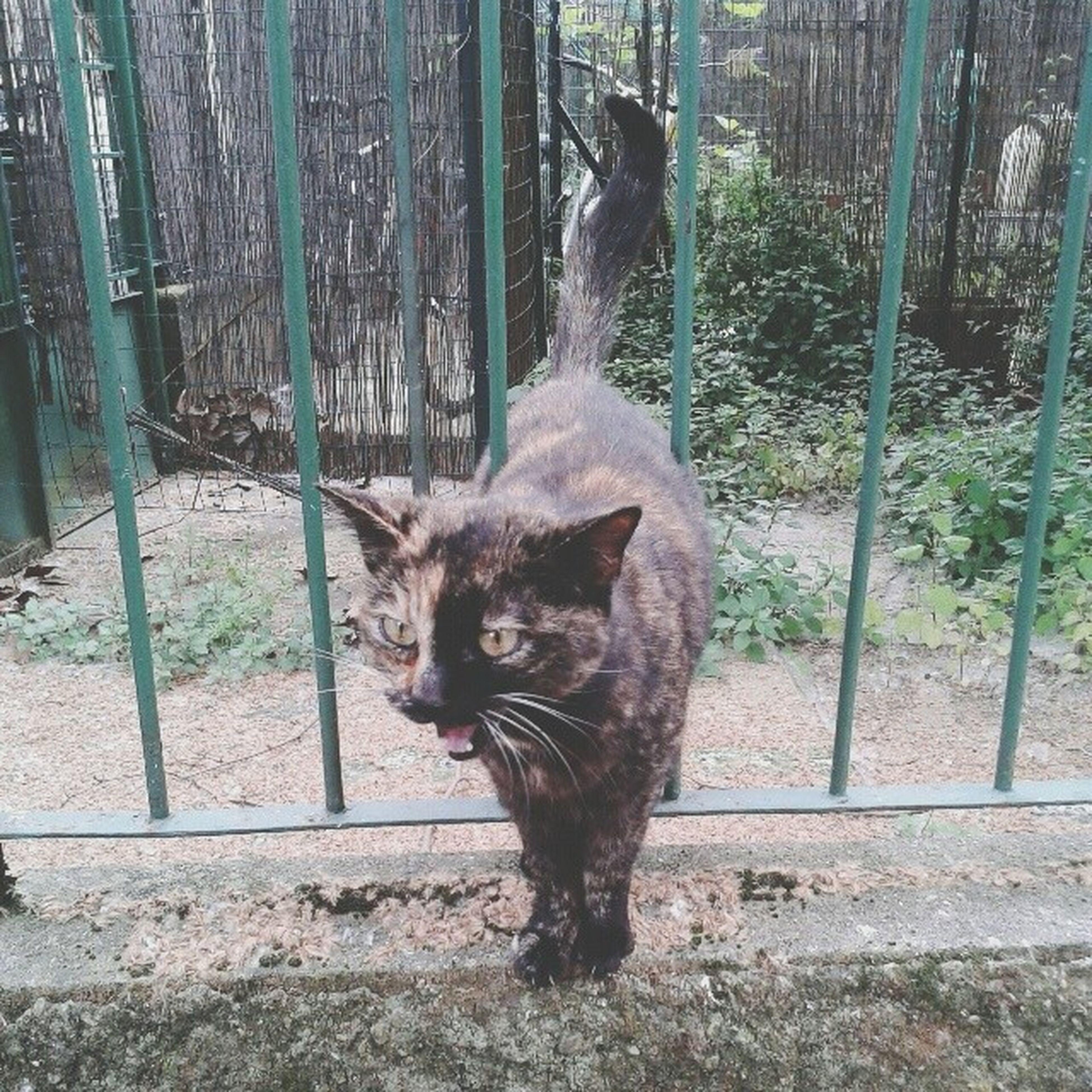 Attendere il bus con lei è stato fantastico ( pt.I ) Kitty Cat Gatto Gatta gattina she lei lovely twocolours morbida cute cutie maow eyes occhi now ora