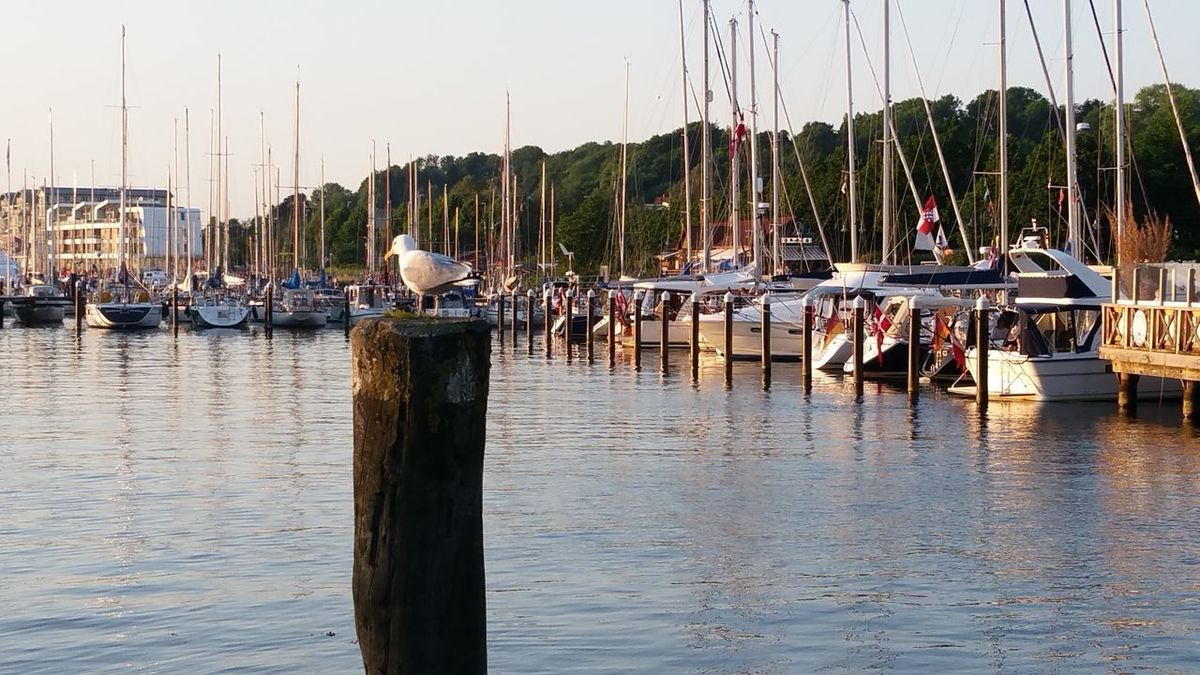EyeEm Selects Hafen Flensburg Flensburg Flensburger Förde Flensburg Harbour Harbour View Seagull My Point Of View Boote Sailboats Sailing Been There.
