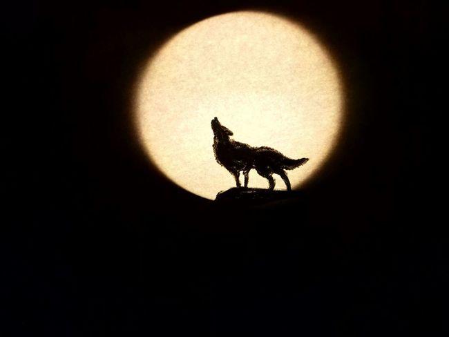 Foto Real. ilusión óptica: Es un dibujo protectado en un flexo Ilusión óptica Lobo Moon Luna Black & White