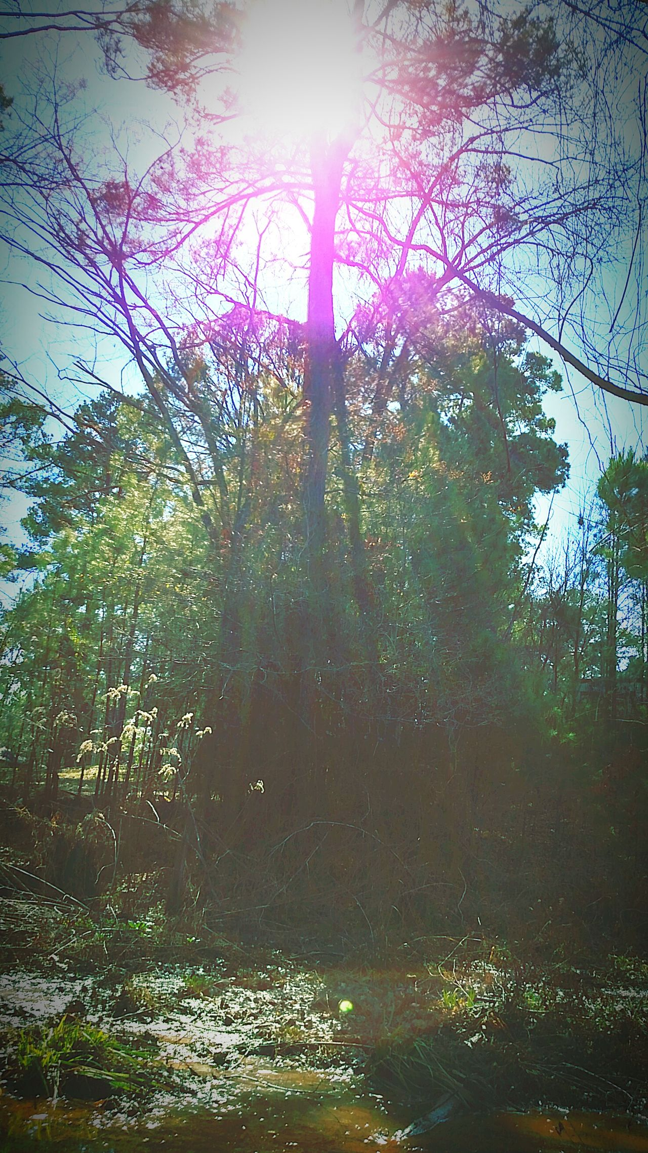 River Reagan Photography Sunday Afternoon February 2012 Sunshine Filtering Through Foliage